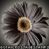 dark daisy flower stamp